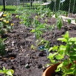Photo Friday – The Mid-May Community Garden