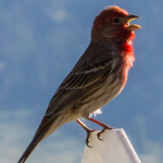 Photo Friday – My Finch Friend
