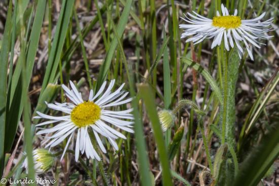 Grasslands-1-6