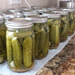 Canning – Dill Pickles