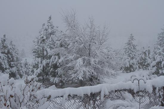 November Snow-1-3