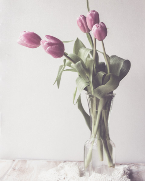 2015-02-11 - Tulips-1