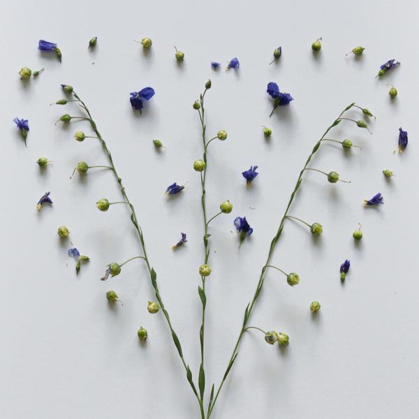 Wild Flowers-1-3