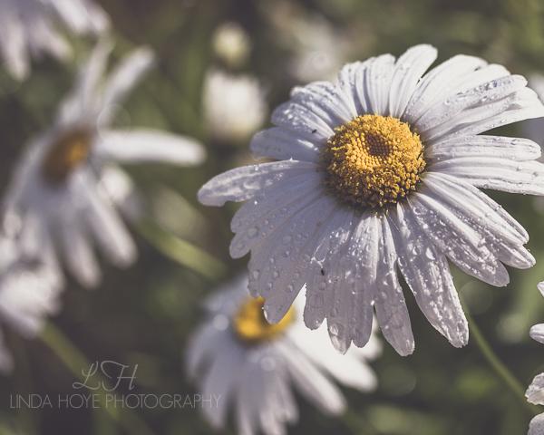 2015-06-28 Daisy Day-1-2