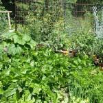 The June 22 Garden