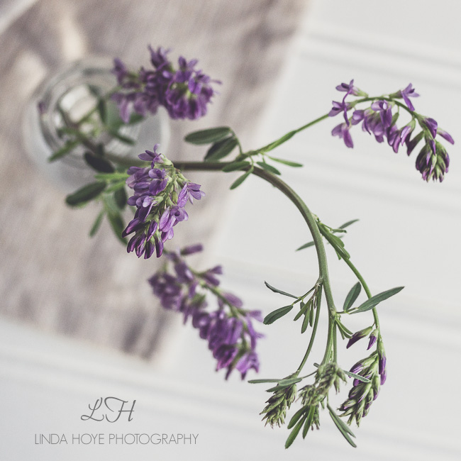 2016-06-02 Wildflowers