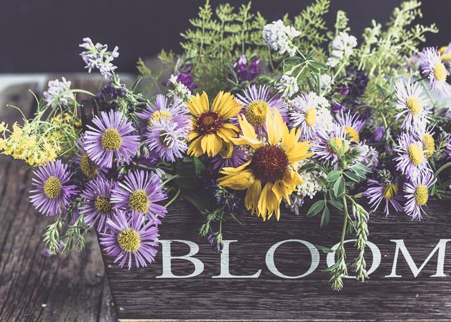 2016-06-14 Bloom-1-8